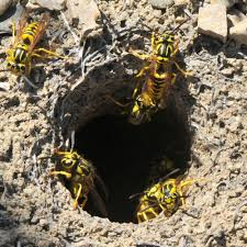 yellowjackets underground